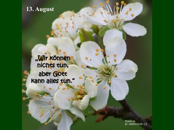 13. August
